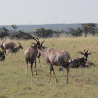 gazellen-und-gnus