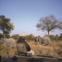 ranger-beobachtet-elefanten
