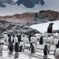 pinguine-und-robben.jpg