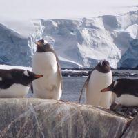 pinguingruppe.jpg