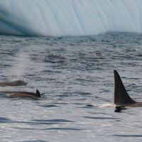 wale-in-der-antarktis.jpg
