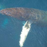 humpback-wal-in-der-antarktis.jpg