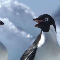 adelie-pinguine.jpg