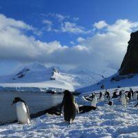 gruppe-von-pinguinen.jpg