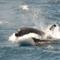 orka-spritzt.jpg