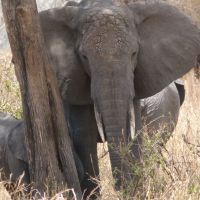 elefant-am-baum.jpg