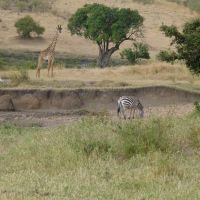 zebra-und-giraffe.jpg