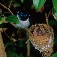 vogel-mit-kleinen