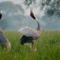 bharatpur-vögel