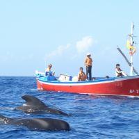 Wale beim Schiff