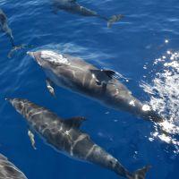 delfine-vor-schiff.jpg
