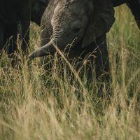 kleiner-elefant