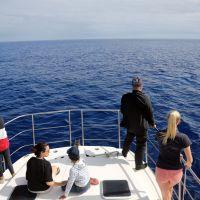 whalewatching-auf-den-azoren.jpg