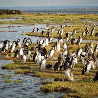 wildes-patagonien-ar-ch-tag-(5).jpg