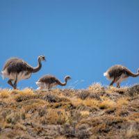 wildes-patagonien-ar-ch-tag-(11)