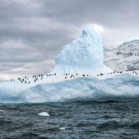kleine-pinguinkolonie-auf-eisscholle