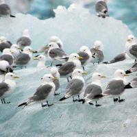 vögel-auf-eis