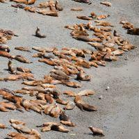 robbenkolonie-am-strand