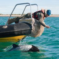 Delfin vor Schiff