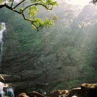 singharaja-rain-forest-1