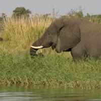 elefant-mit-vogel