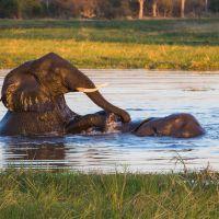 elefanten-baden