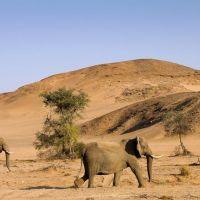 desert-elephant-twyfelfontein