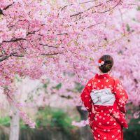 frau-im-kinomo-kirschblüten