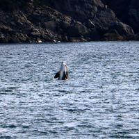 day-8---xl-day-13---orca,-kenai-fjords-tour