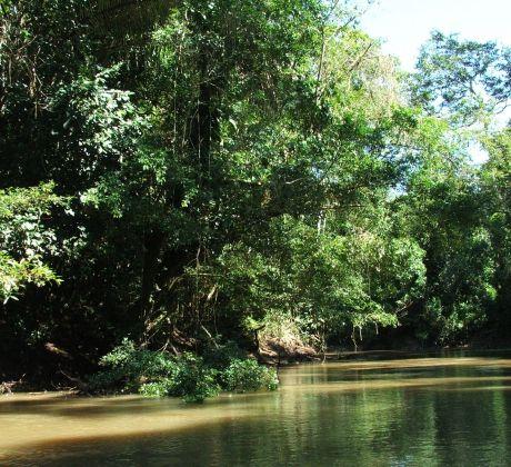 Dschungel in Ecuador