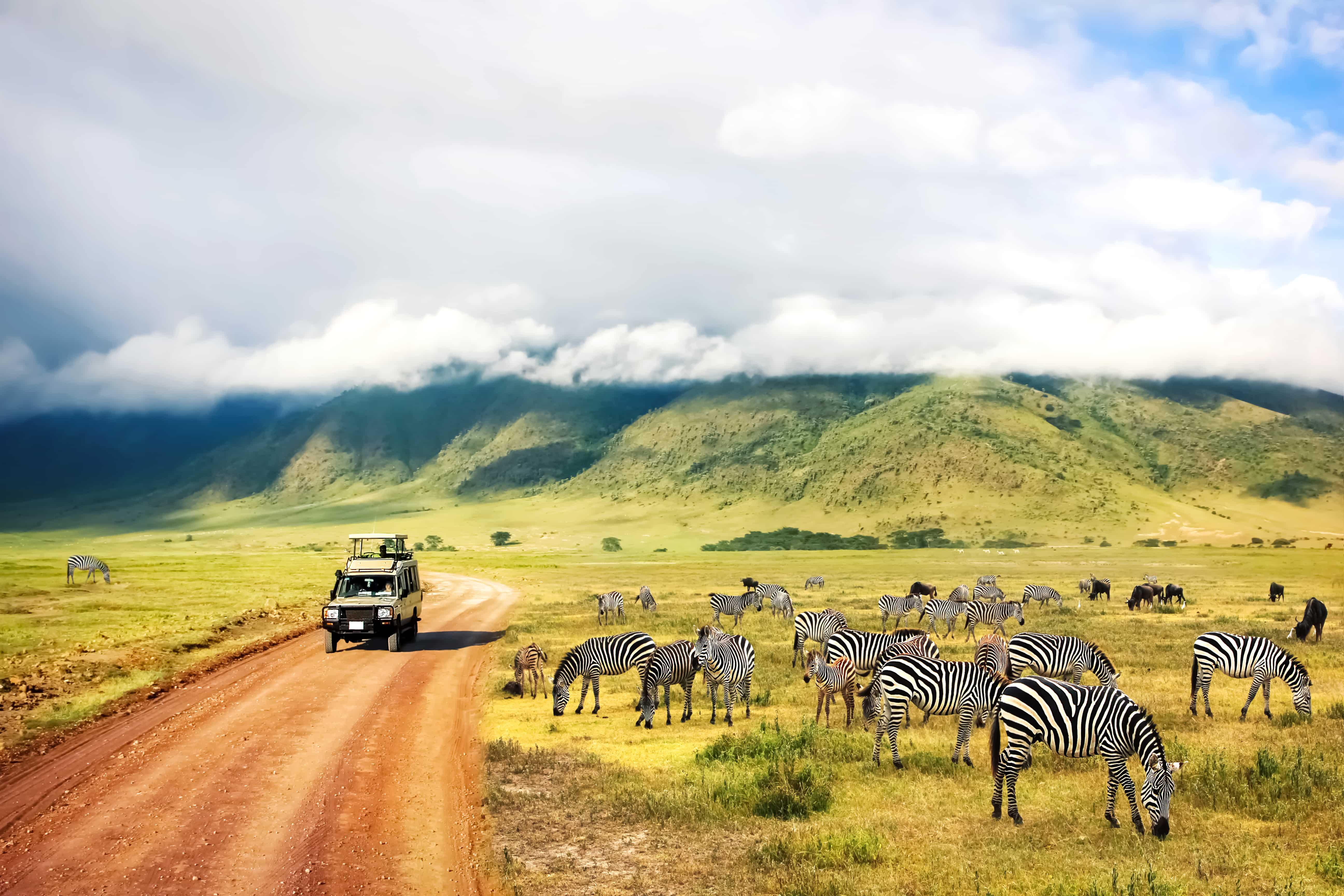 Zebras auf Safari