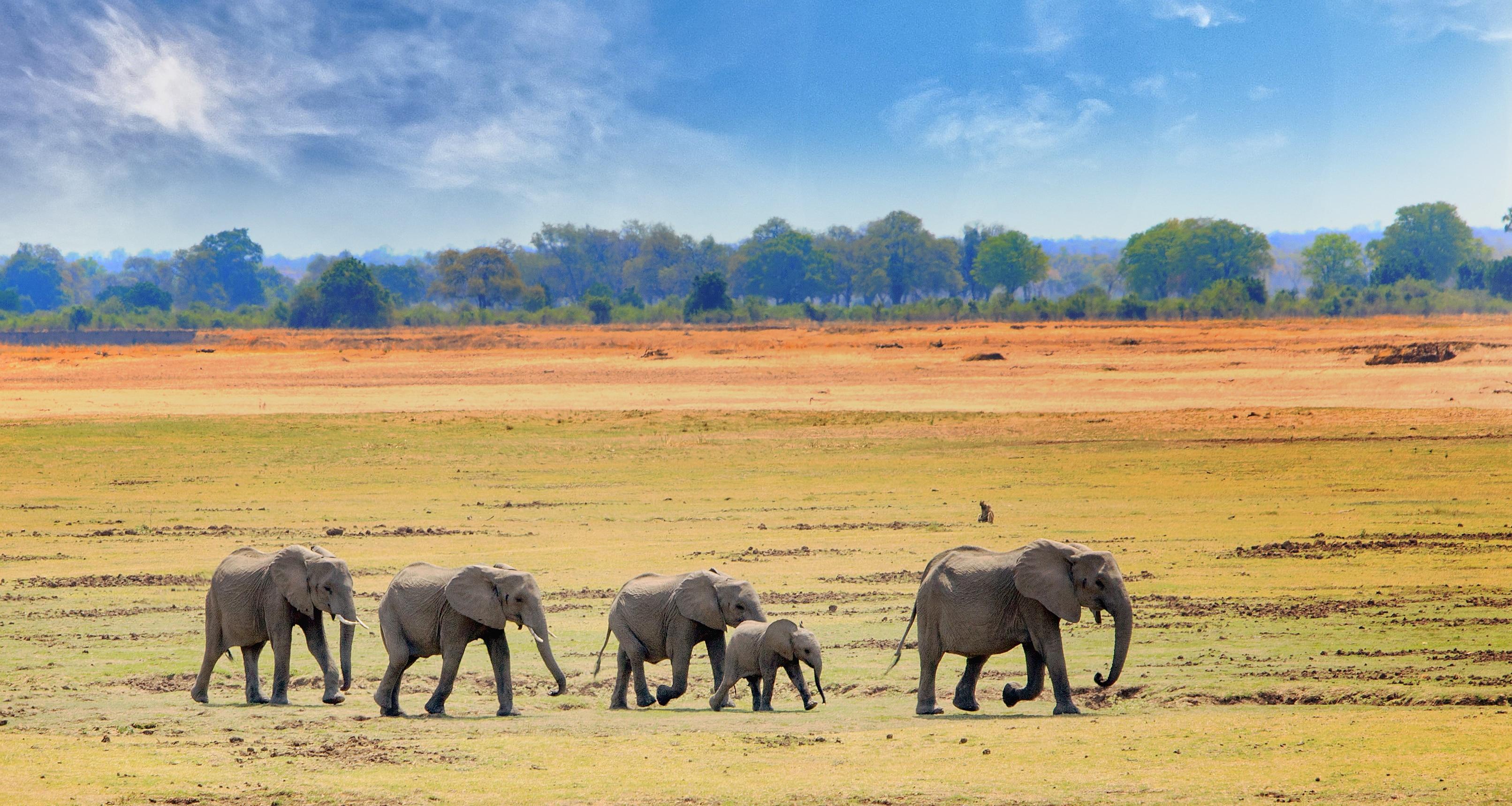 Elefanten im Südluangwa Nationalpark