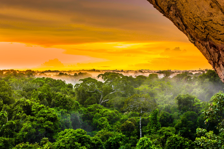 Sonnenaufgang im Amazonas