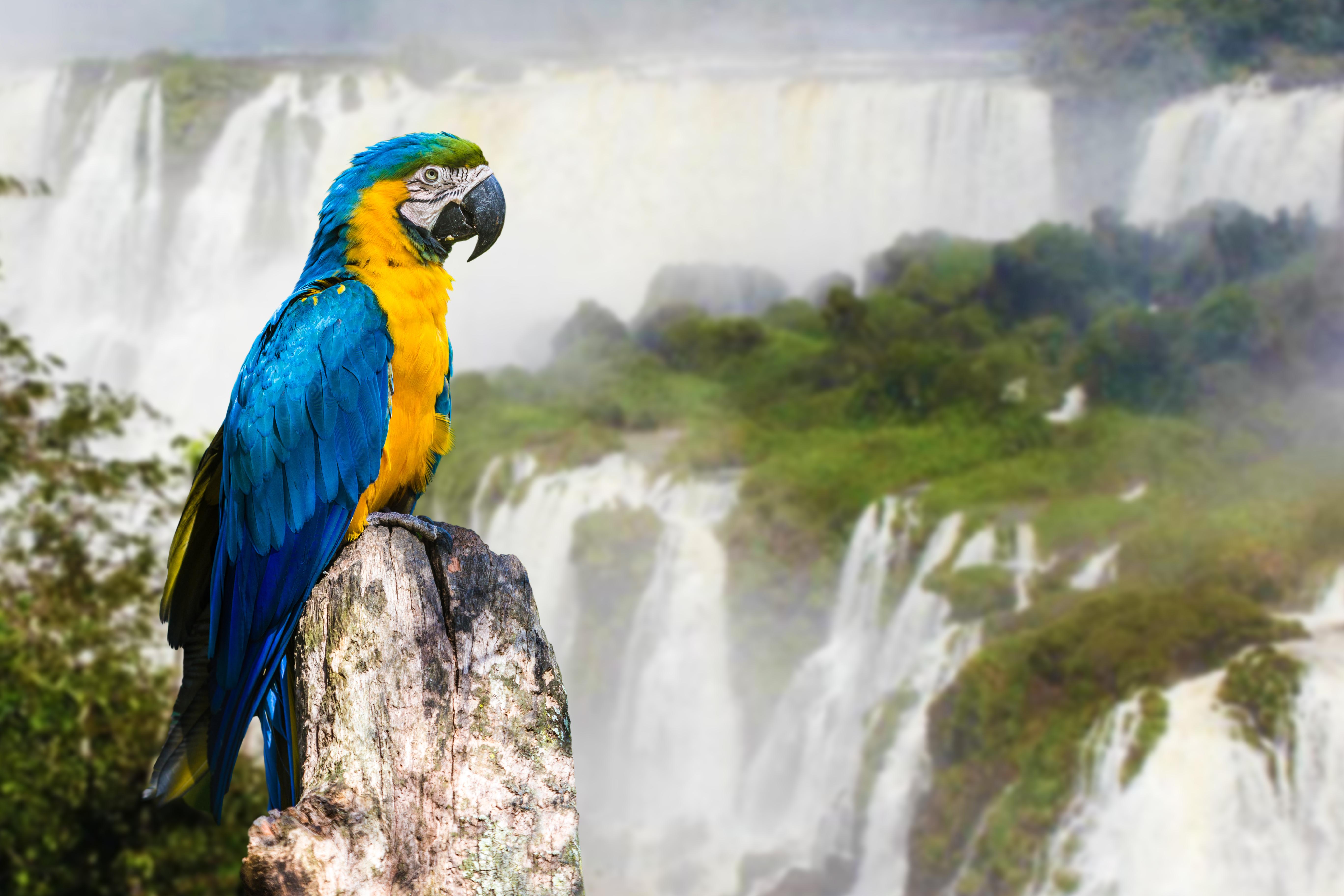 Papagei an den Iguazu Wasserfällen