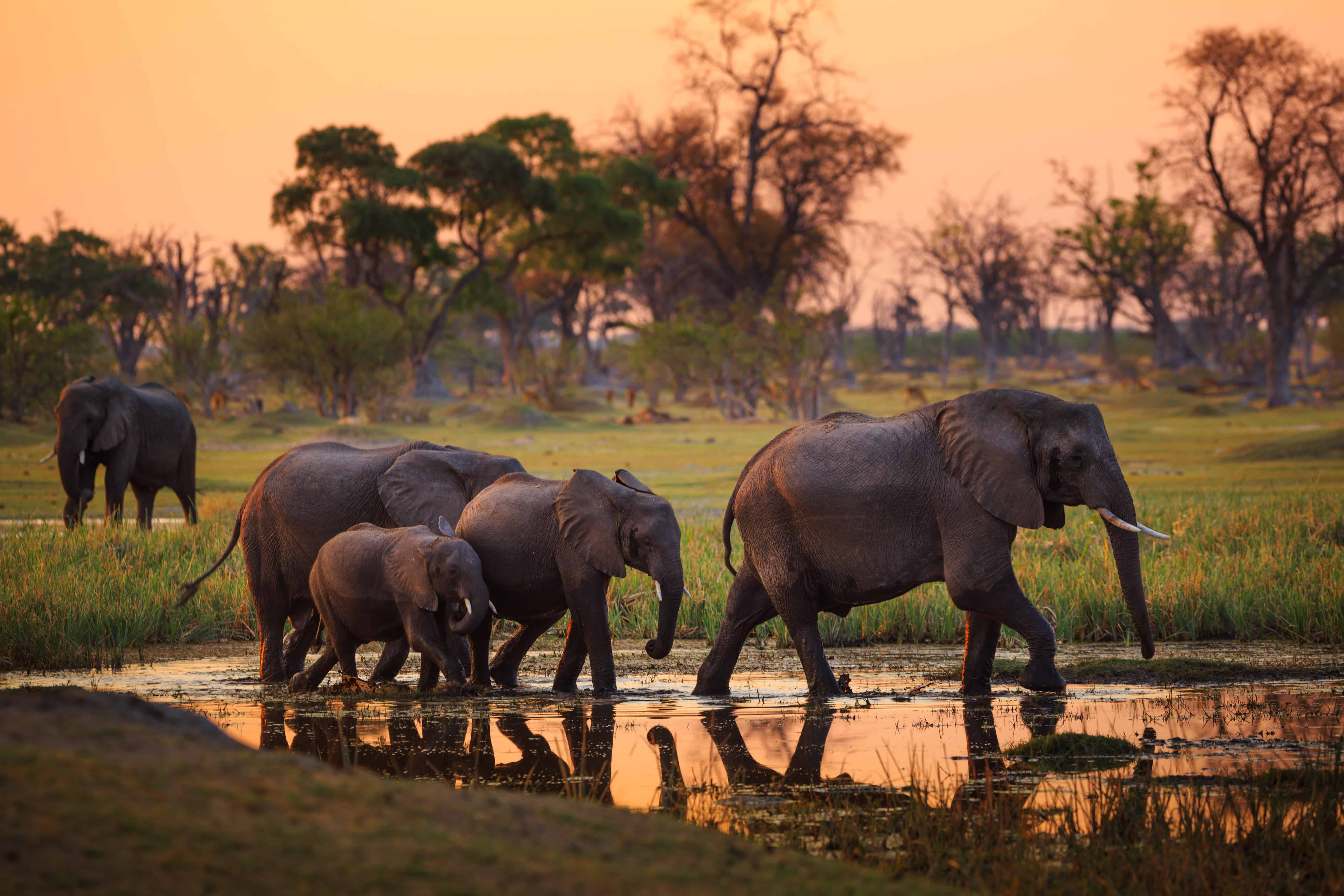 Elefanten im Moremi Nationalpark