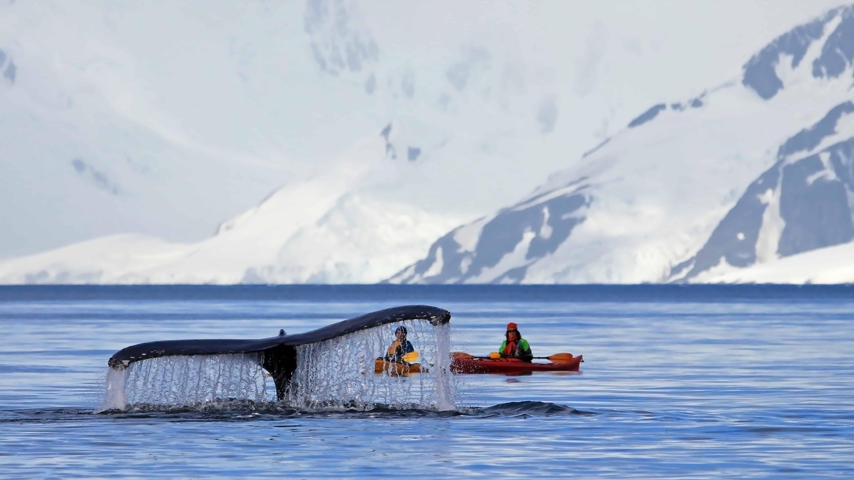 Wal im Weddelmeer
