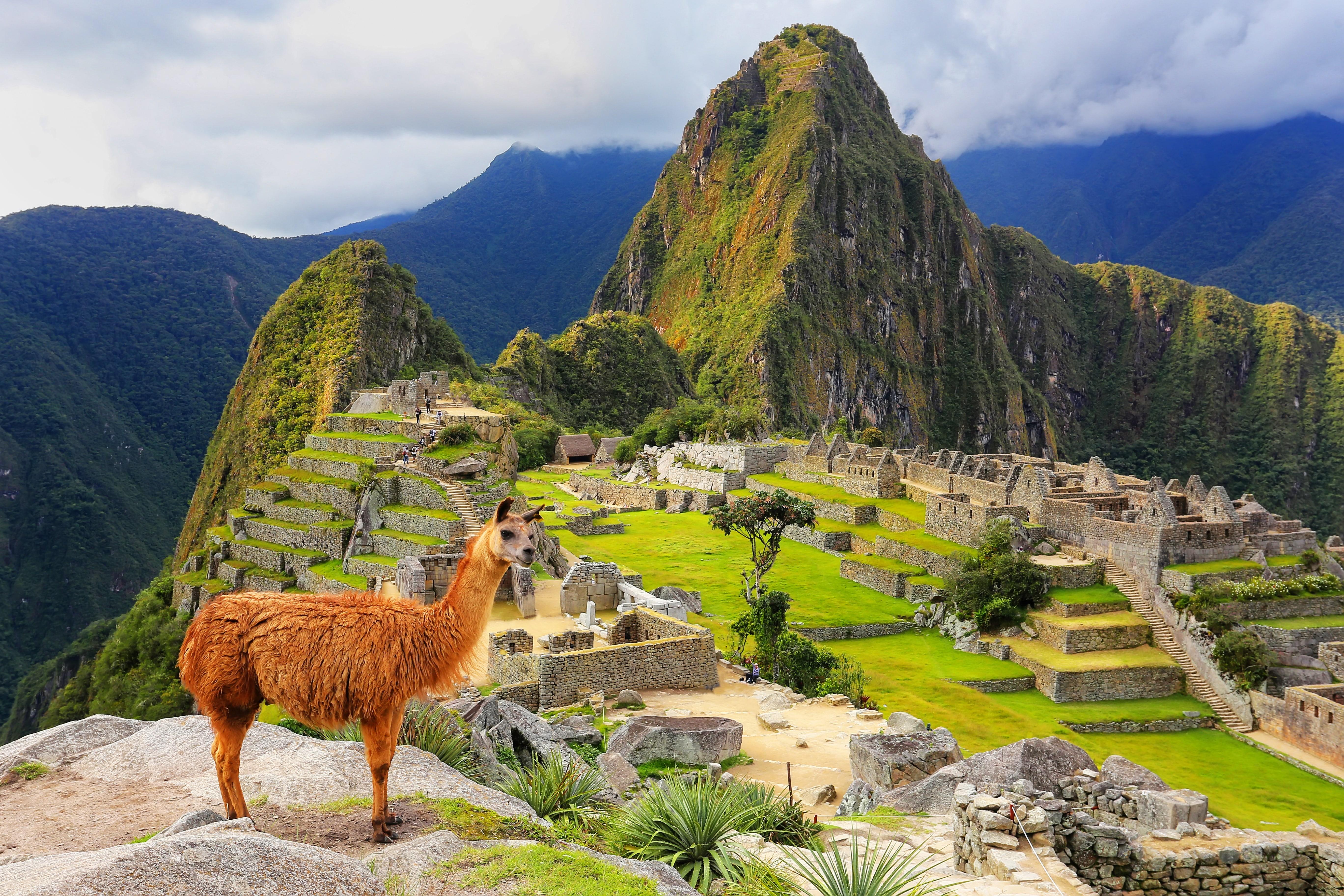 Machu Picchu mit Lama
